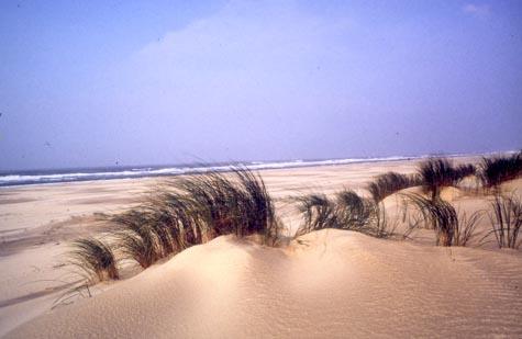Dunes et mer